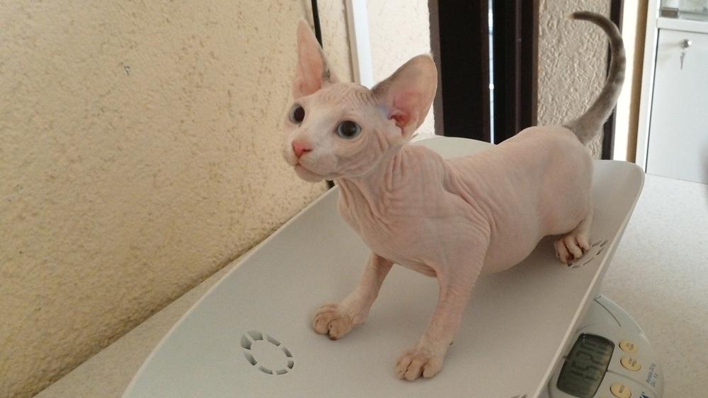 Когда кота вести к ветеринару